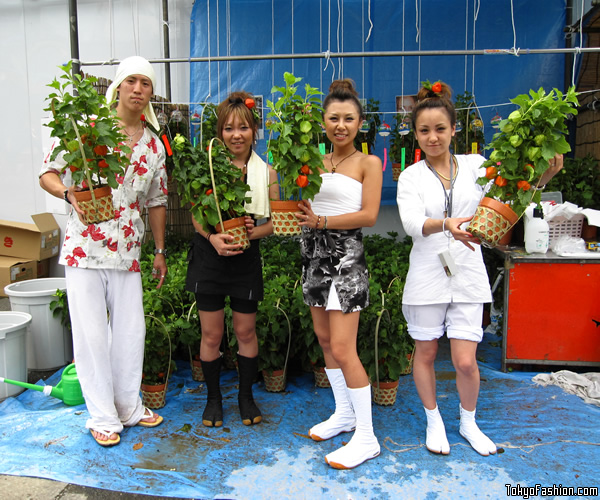 Sensoji Temple Lantern Plant Festival