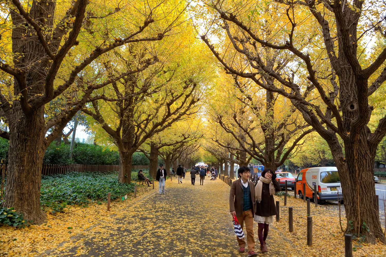 Fall Leaves in Tokyo