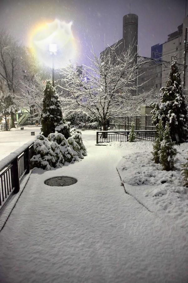 Pretty Snow in Tokyo