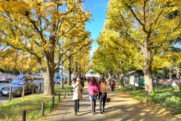 Colorful Fall Leaves in Tokyo Japan (35)