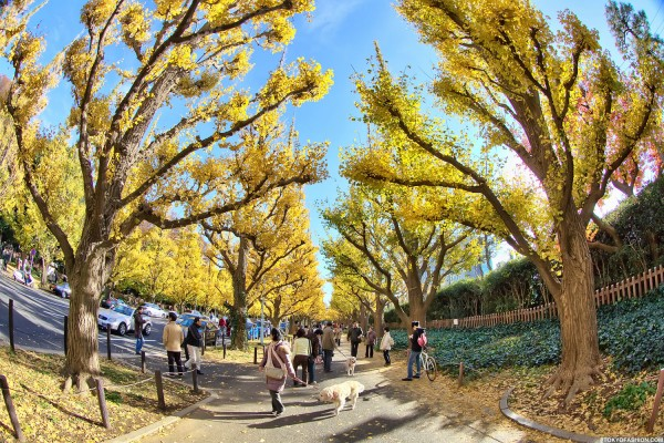 Colorful Fall Leaves in Tokyo Japan (33)