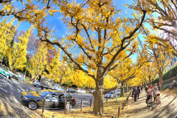 Colorful Fall Leaves in Tokyo Japan (32)