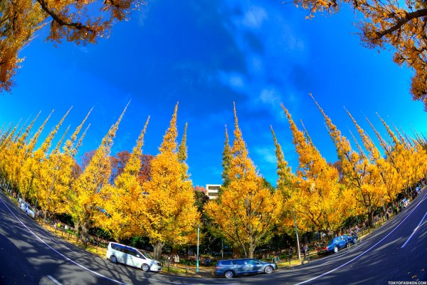 Colorful Fall Leaves in Tokyo Japan (31)