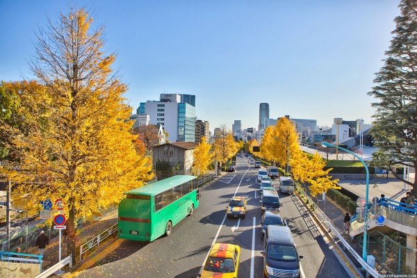 Colorful Fall Leaves in Tokyo Japan (30)