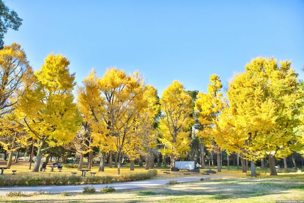 Colorful Fall Leaves in Tokyo Japan (29)