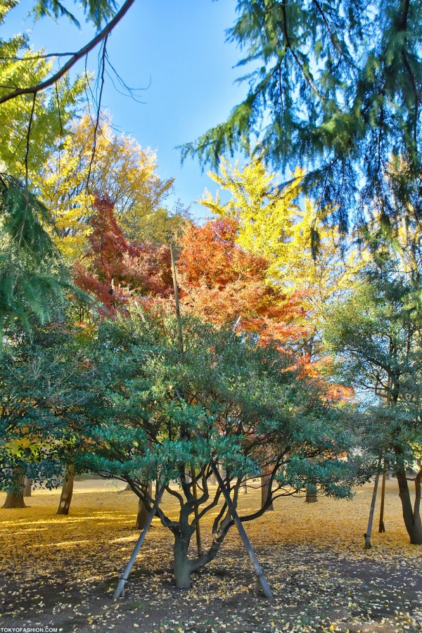 Colorful Fall Leaves in Tokyo Japan (27)