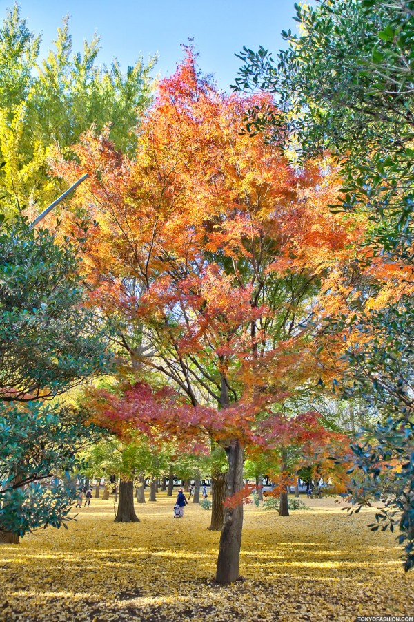 Colorful Fall Leaves in Tokyo Japan (26)