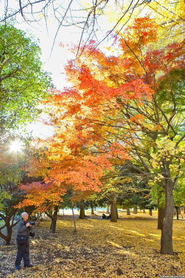 Colorful Fall Leaves in Tokyo Japan (25)