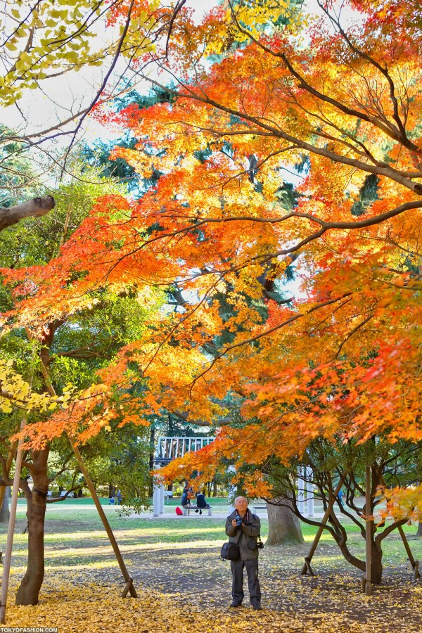 Colorful Fall Leaves in Tokyo Japan (24)