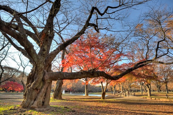 Colorful Fall Leaves in Tokyo Japan (19)