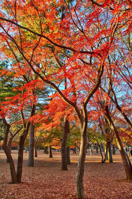 Big Fashion Color For Fall
