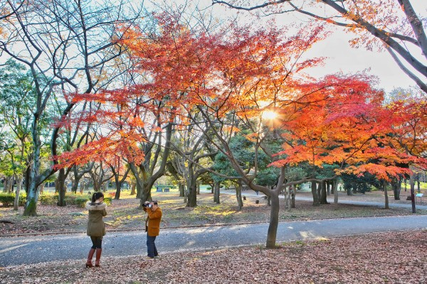 Colorful Fall Leaves in Tokyo Japan (16)