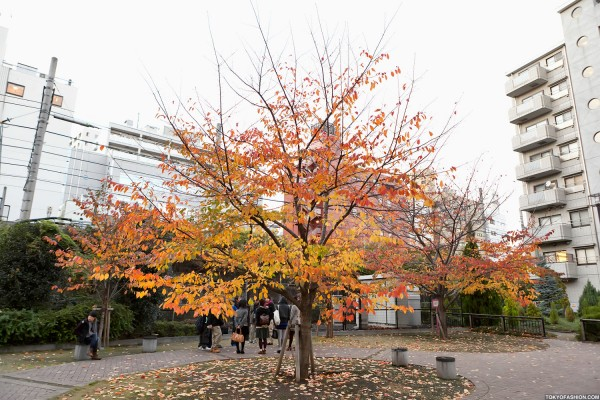 Colorful Fall Leaves in Tokyo Japan (14)