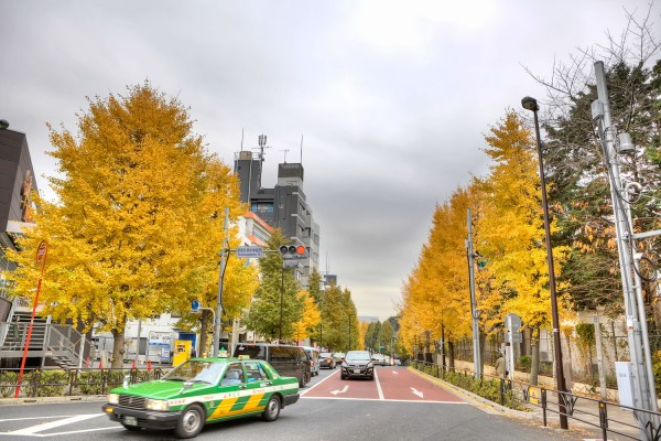 Colorful Fall Leaves in Tokyo Japan (13)