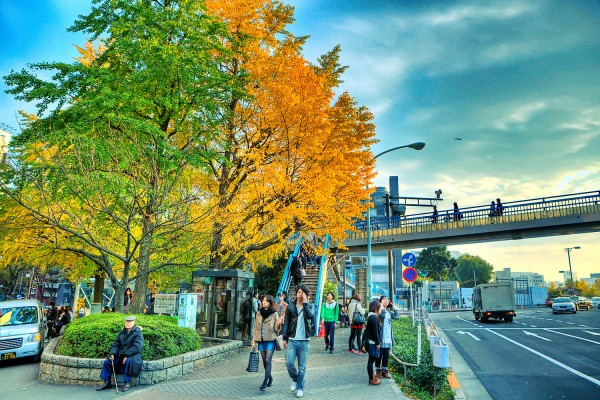 Colorful Fall Leaves in Tokyo Japan (11)
