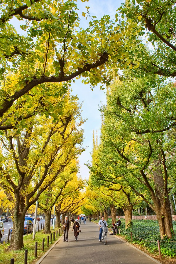 Colorful Fall Leaves in Tokyo Japan (10)