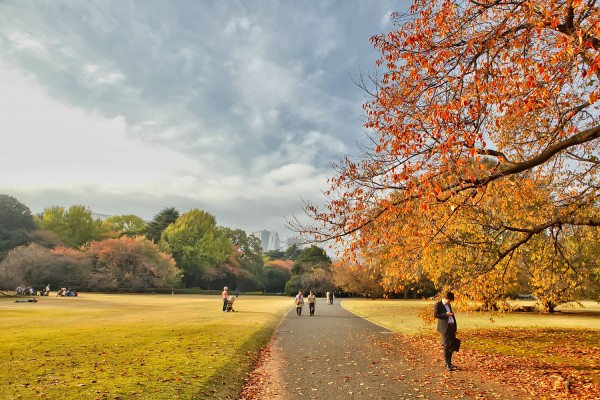Colorful Fall Leaves in Tokyo Japan (8)