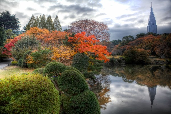 Colorful Fall Leaves in Tokyo Japan (7)