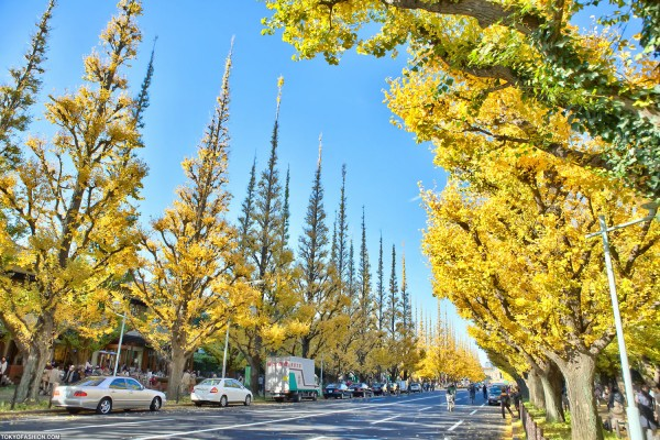 Colorful Fall Leaves in Tokyo Japan (4)