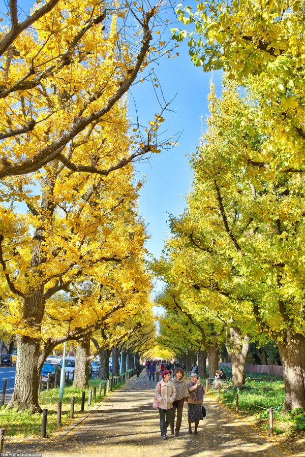 Colorful Fall Leaves in Tokyo Japan (3)