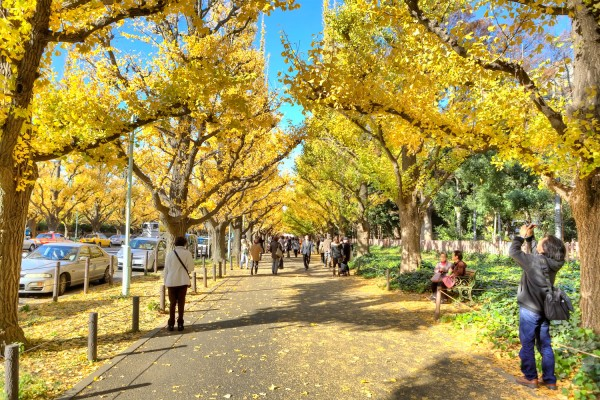 Colorful Fall Leaves in Tokyo Japan (1)