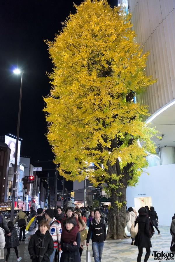 Harajuku Christmas - Meiji Dori (115)