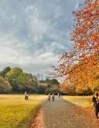Fall Colors in Tokyo 2011 Pictures – Harajuku, Shinjuku & Aoyama